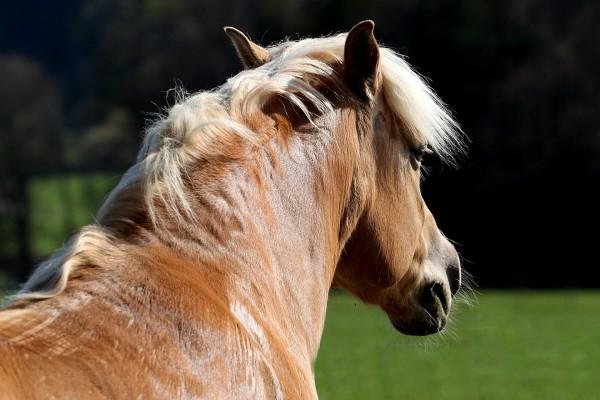 horse-426414_1920