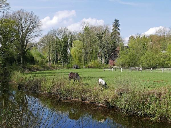 pasture-3323119_1920